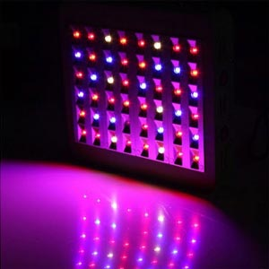 Aussies Indoor Led Grow Specialist Led Grow Light Shop